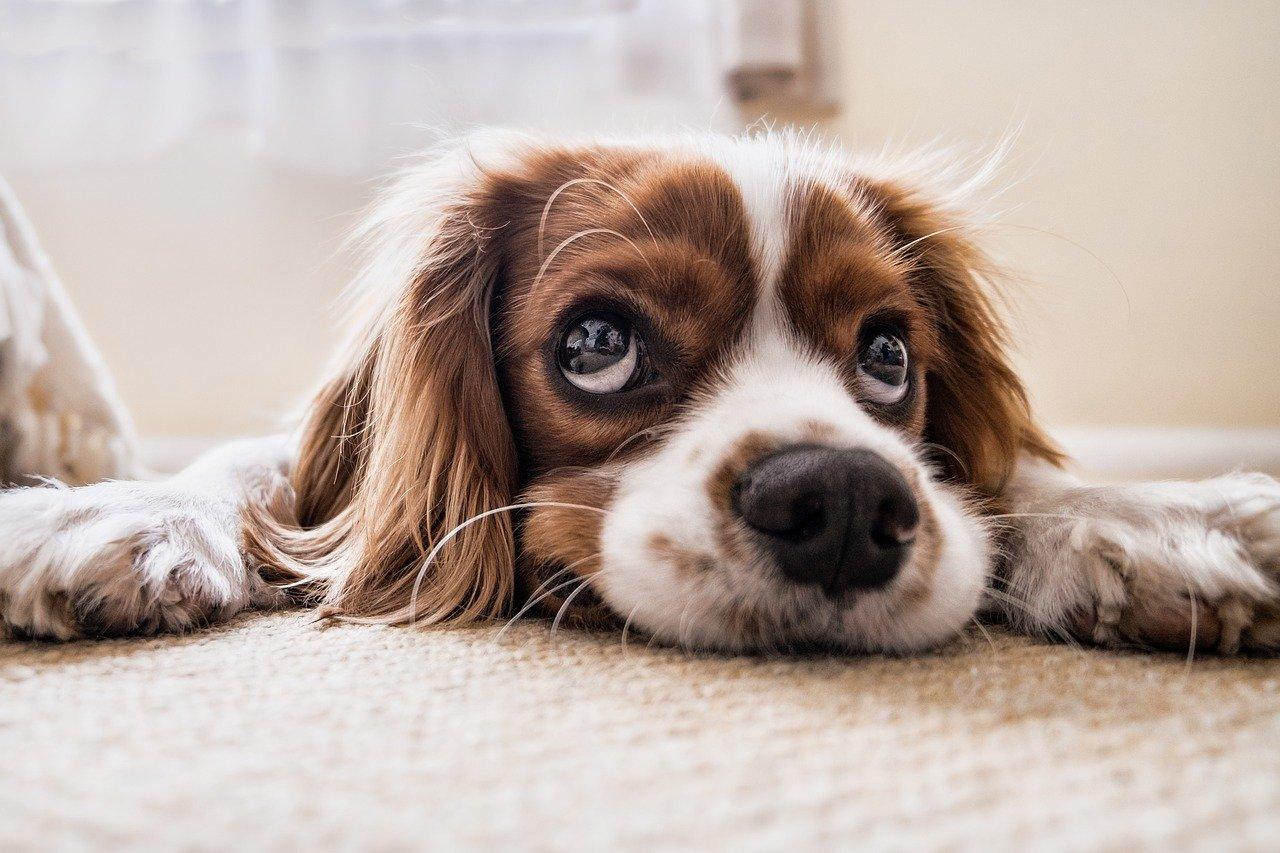לאכול פרו פלאן ולישון על מיטה נוחה – 2 הדברים שכלבים אוהבים